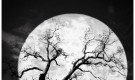"""""""> En iyi ay ışığı fotoğrafları için cihazınızın ampul modunu kullanın"""